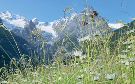 Natur pur: Nationalpark Stilfserjoch